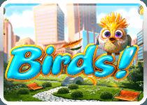 Birds!
